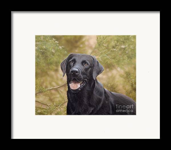 Black Labrador Framed Print featuring the painting Black Watch by John Silver