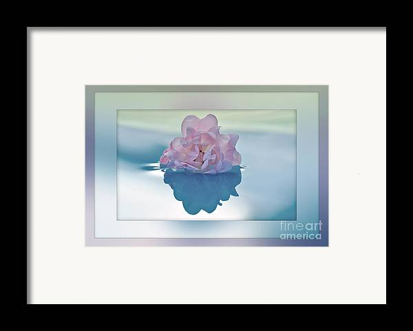 Photography Framed Print featuring the photograph Blend Of Pastels by Kaye Menner