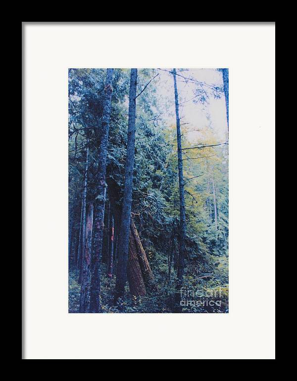 First Star Framed Print featuring the photograph Blue Forest By Jrr by First Star Art