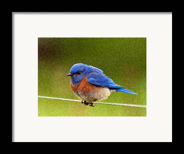 Animals Framed Print featuring the photograph Bluebird Painting by Jean Noren