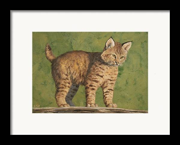 Cat Framed Print featuring the painting Bobcat Kitten by Crista Forest