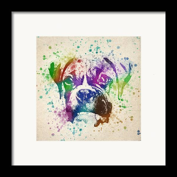 Boxer Framed Print featuring the drawing Boxer Splash by Aged Pixel
