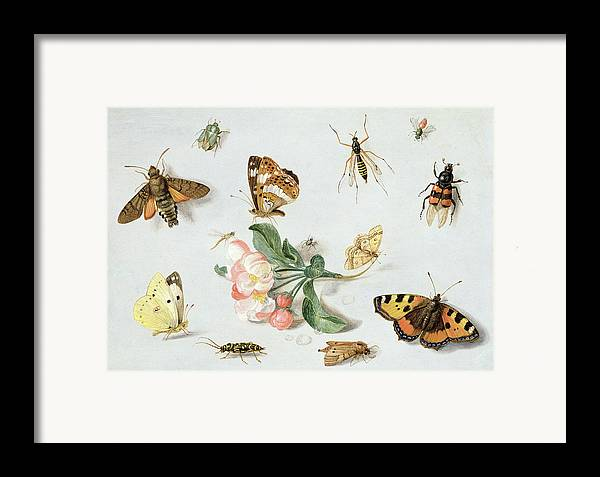 Butterfly Framed Print featuring the painting Butterflies Moths And Other Insects With A Sprig Of Apple Blossom by Jan Van Kessel