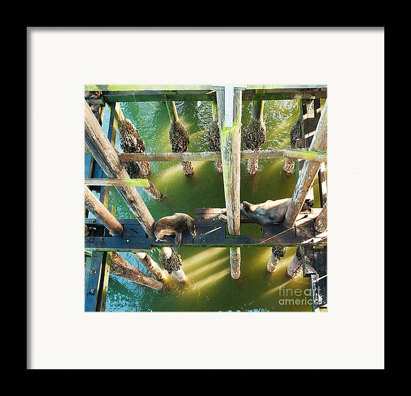 California Sealions Framed Print featuring the photograph California Sealions Under The Santa Cruz Pier by Artist and Photographer Laura Wrede
