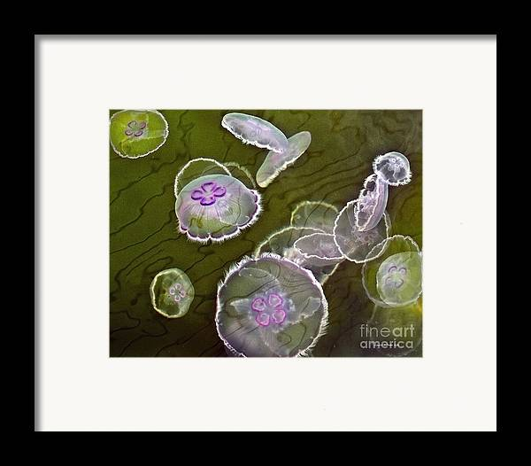 Moon Jellies Framed Print featuring the photograph Canadian Moon Jelly Dance by Artist and Photographer Laura Wrede