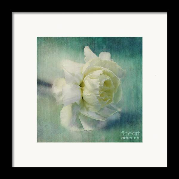 Carnation Framed Print featuring the photograph Carnation by Priska Wettstein