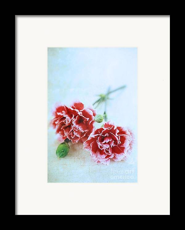 Colour Framed Print featuring the photograph Carnations by Stephanie Frey