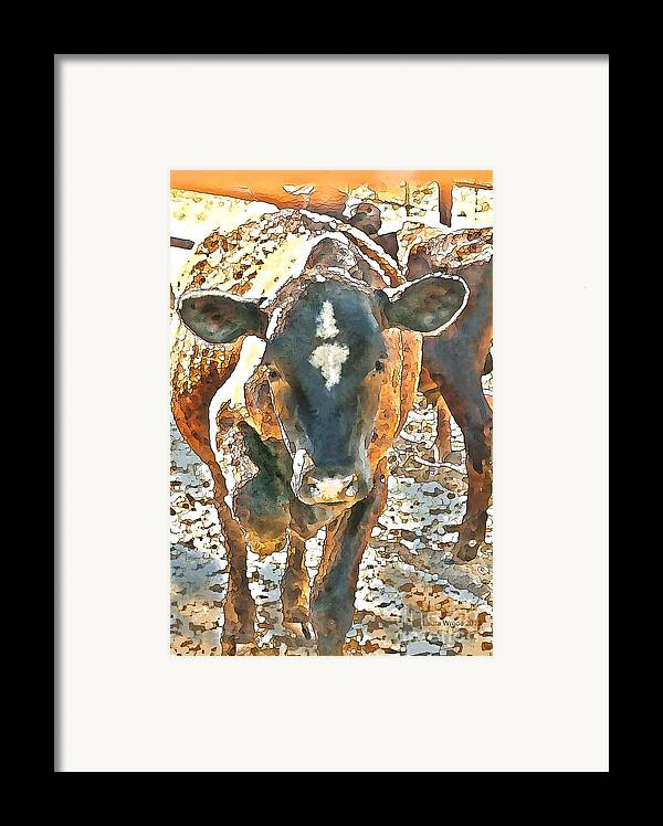 Cow Art Framed Print featuring the photograph Cattle Round Up by Artist and Photographer Laura Wrede