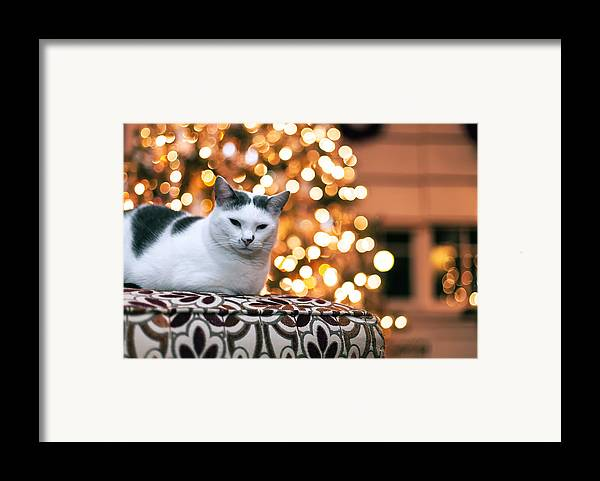 Pet Framed Print featuring the photograph Charly And The Xmas Tree by Edward Kreis