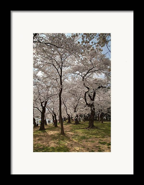 America Framed Print featuring the photograph Cherry Blossoms - Washington Dc - 011378 by DC Photographer
