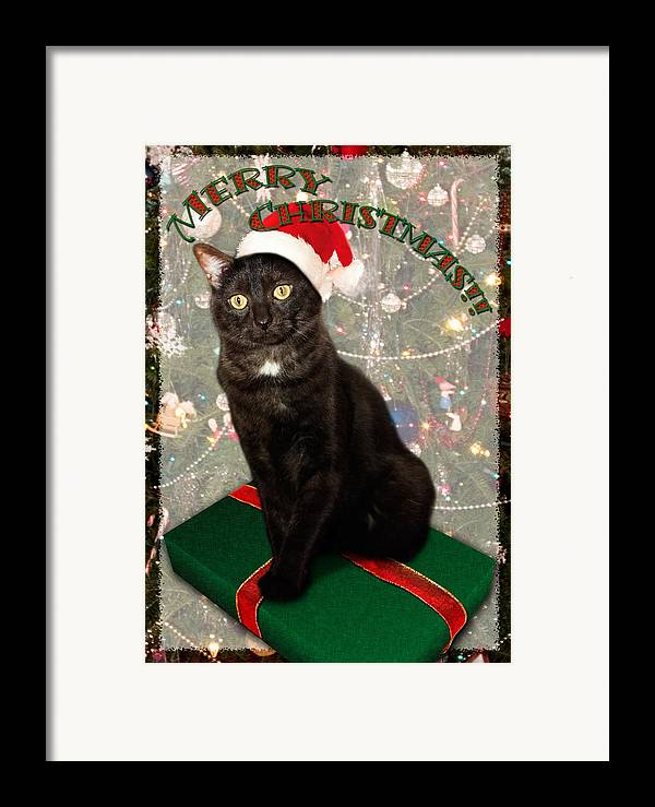 3scape Photos Framed Print featuring the photograph Christmas Cat by Adam Romanowicz