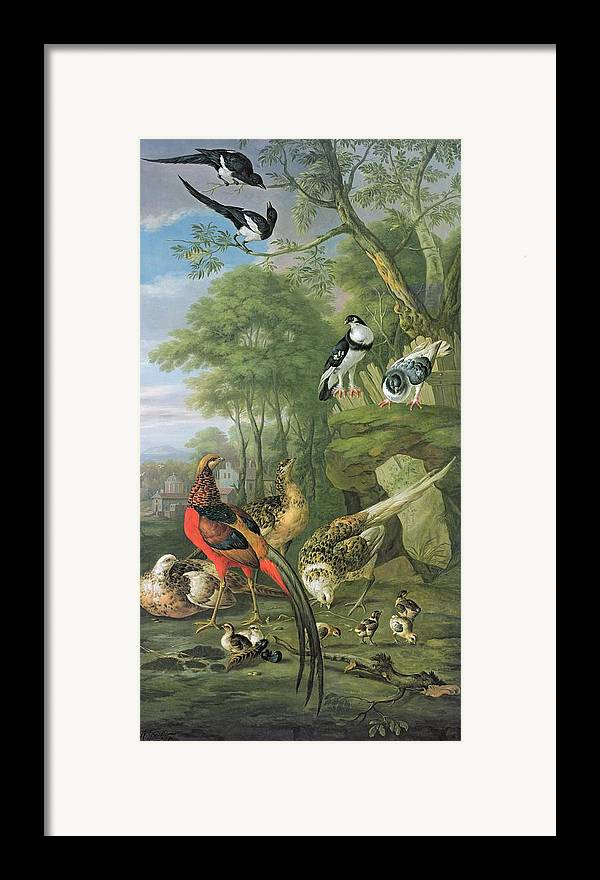 Ornithology Framed Print featuring the painting Cock Pheasant Hen Pheasant And Chicks And Other Birds In A Classical Landscape by Pieter Casteels