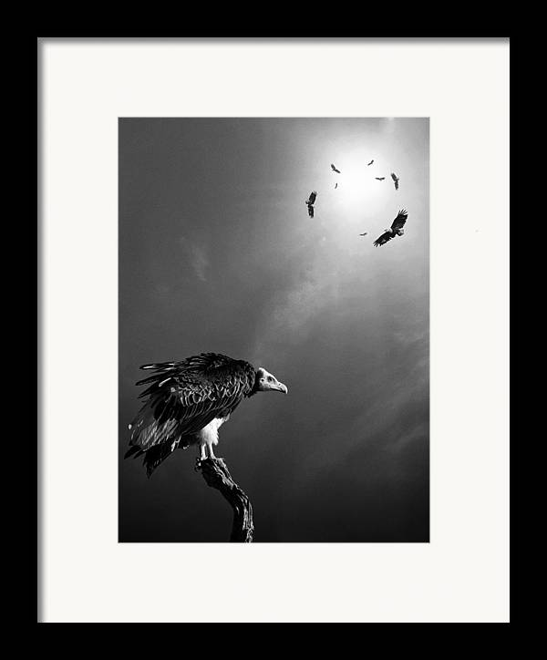 Vulture Framed Print featuring the photograph Conceptual - Vultures Awaiting by Johan Swanepoel