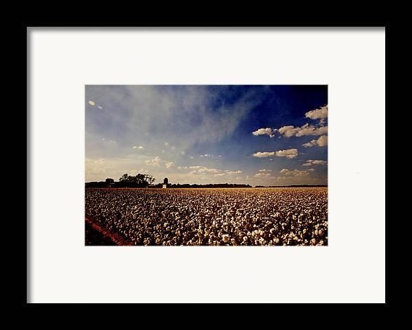 Cotton Framed Print featuring the photograph Cotton Field by Scott Pellegrin