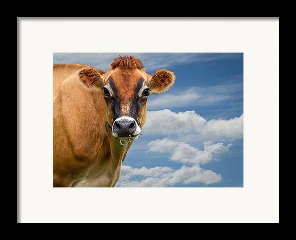 Cow Framed Print featuring the photograph Dairy Cow Bessy by Bob Orsillo