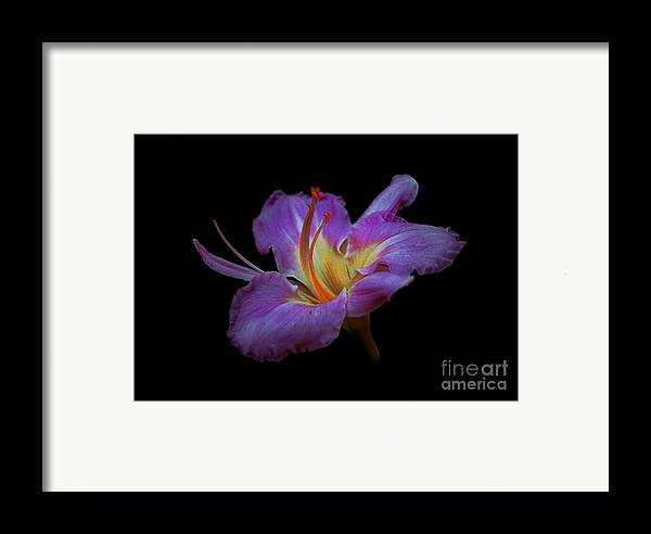 Beautiful Framed Print featuring the photograph Daylily Bloom In The Dark by ImagesAsArt Photos And Graphics