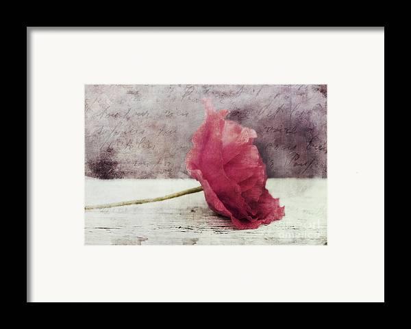 Poppy Framed Print featuring the photograph Decor Poppy Horizontal by Priska Wettstein