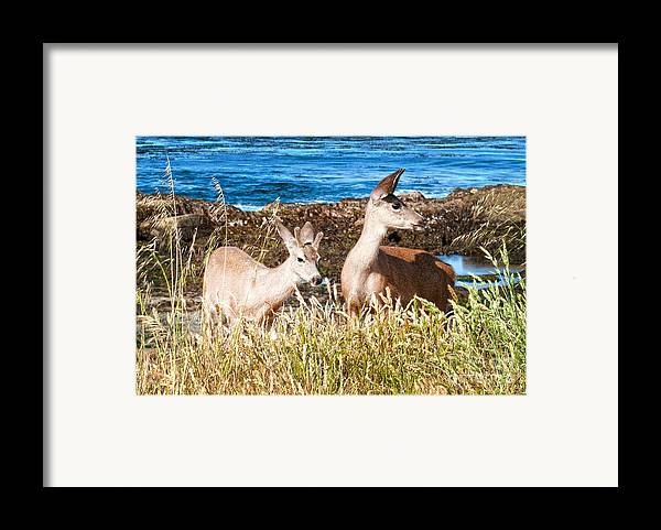 State Beach Near Big Sur Framed Print featuring the photograph Deer On The Beach At Point Lobos Ca by Artist and Photographer Laura Wrede