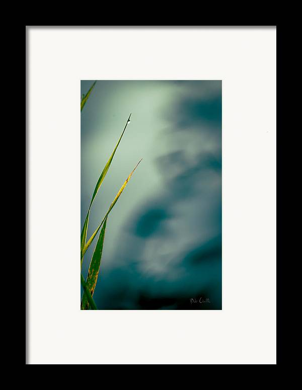 Grass Framed Print featuring the photograph Dew Drop by Bob Orsillo