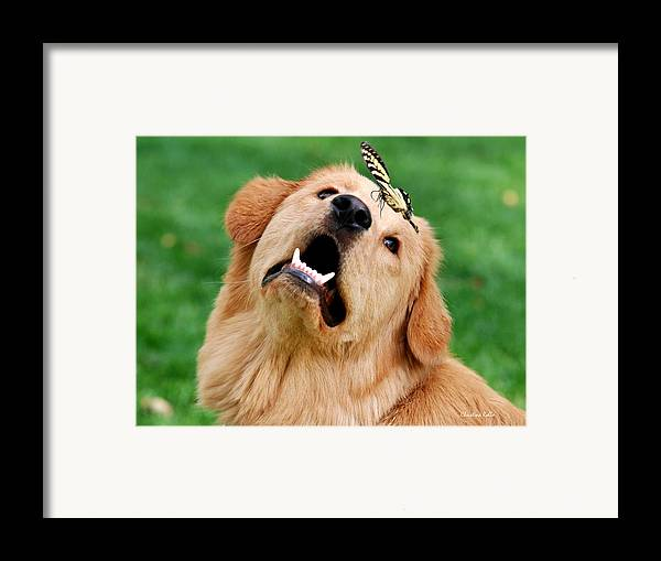 Golden Framed Print featuring the digital art Dog And Butterfly by Christina Rollo