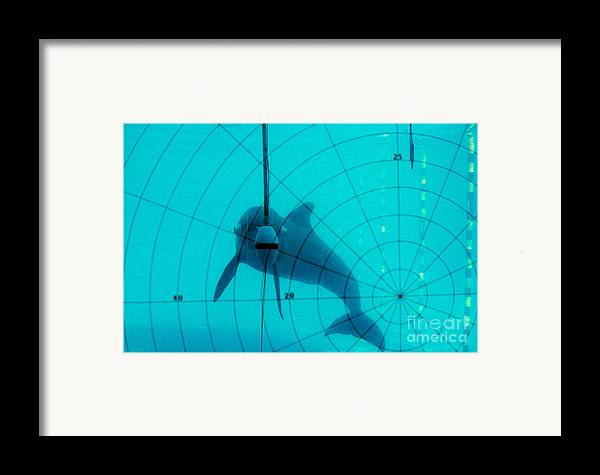 Nature Framed Print featuring the photograph Dolphin Experiment by James L. Amos