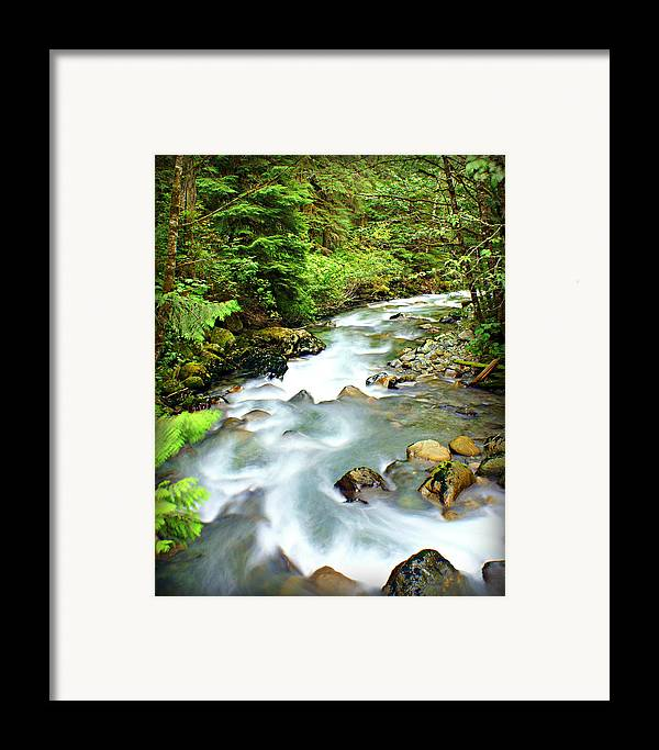 Stream Framed Print featuring the photograph Downstram In The Olympics by Marty Koch