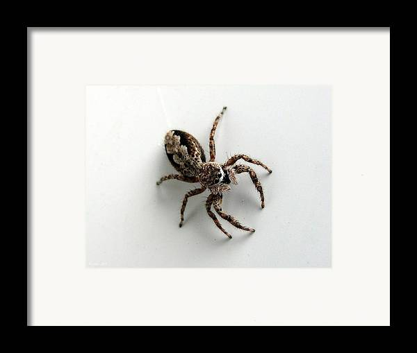 Spider Framed Print featuring the photograph Elegant Jumping Spider by Christina Rollo