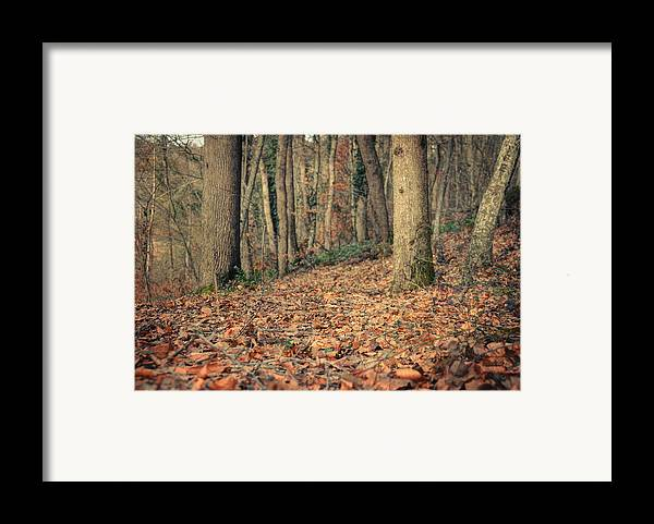 Woods Framed Print featuring the photograph Expectation by Taylan Soyturk