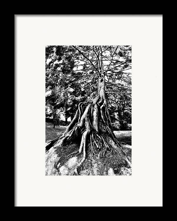 Tree Framed Print featuring the photograph Exposed by Benjamin Yeager