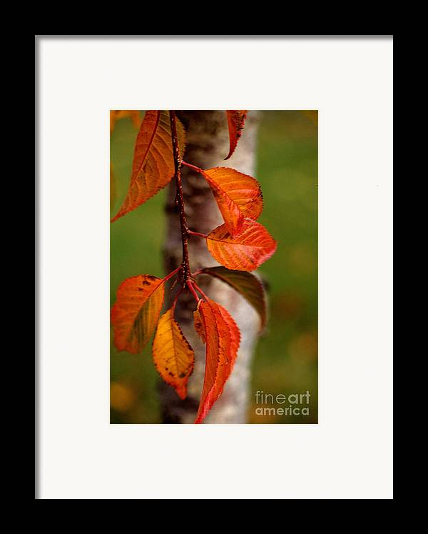 Fall Framed Print featuring the photograph Fall Beauty by Sharon Elliott