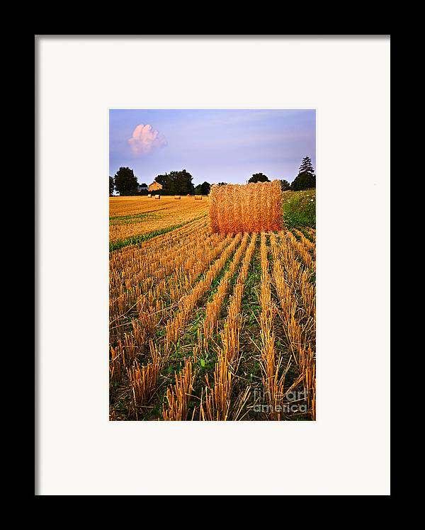 Farm Framed Print featuring the photograph Farm Field With Hay Bales At Sunset In Ontario by Elena Elisseeva