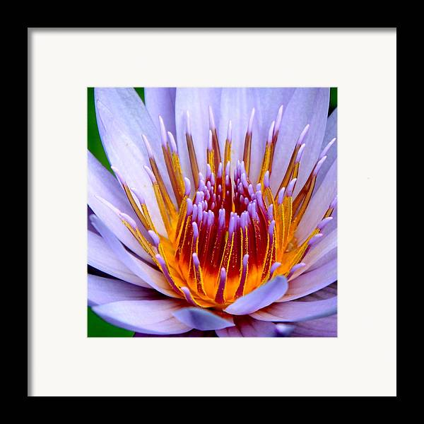 Lotus Flower Framed Print featuring the photograph Fiery Eloquence by Karon Melillo DeVega