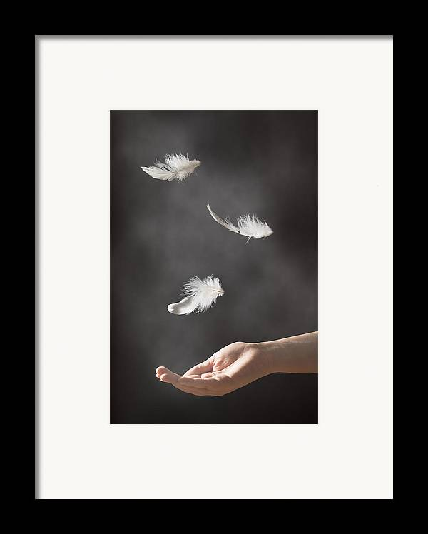 Floating Framed Print featuring the photograph Floating Feathers by Amanda And Christopher Elwell