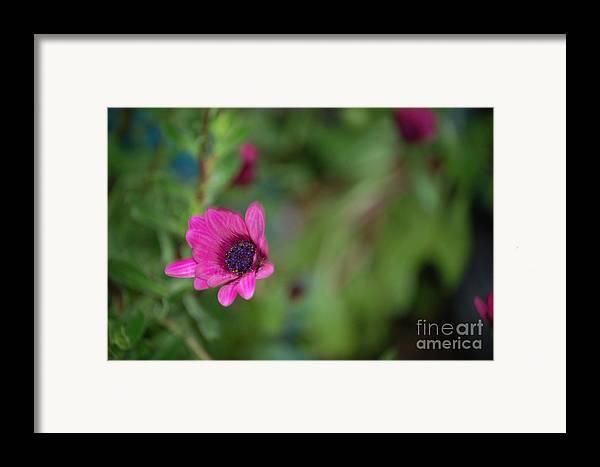 Flower Framed Print featuring the photograph Flower Bokeh by Jordan Rusin