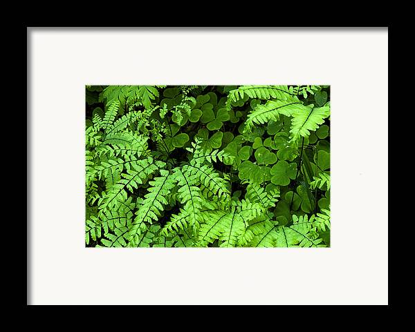 Leaves Framed Print featuring the photograph Foliage At Springtime by Andrew Soundarajan