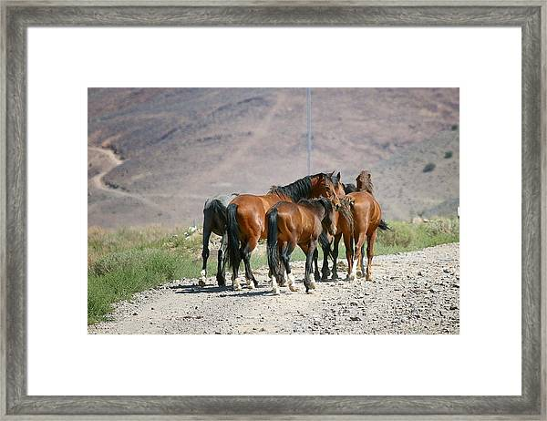 Friends Framed Print featuring the photograph Friends by Maria Jansson