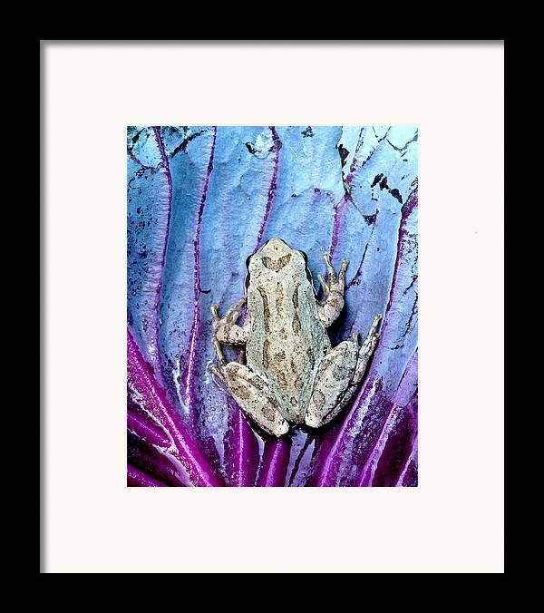Jeannoren Framed Print featuring the photograph Frog On Cabbage by Jean Noren