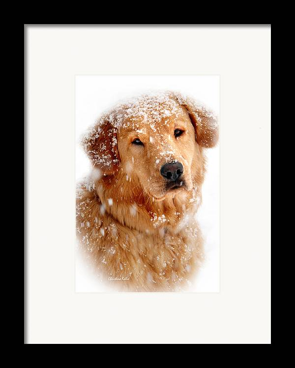 Dog Framed Print featuring the photograph Frosty Mug by Christina Rollo