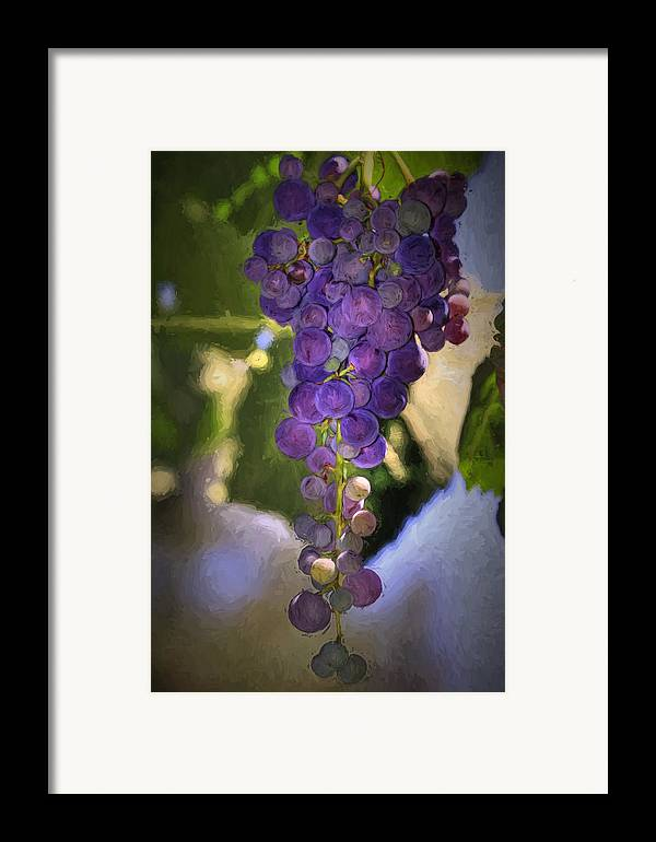 Grape Framed Print featuring the photograph Fruit Of The Vine by Donna Kennedy