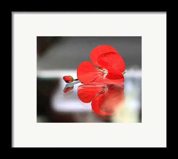 Geranium Framed Print featuring the photograph Geranium Reflections by Andrea Lazar