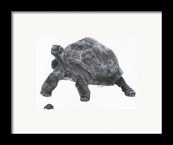 Giant Tortoise Framed Print featuring the drawing Giant Tortoise by Lucy D