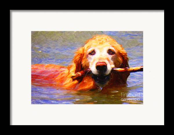 Animal Framed Print featuring the photograph Golden Retriever - Painterly by Wingsdomain Art and Photography