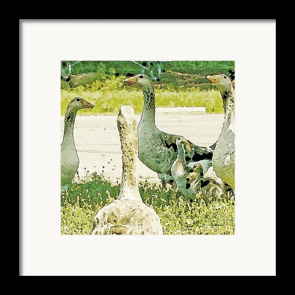 Geese Framed Print featuring the photograph Goose Chat by Artist and Photographer Laura Wrede
