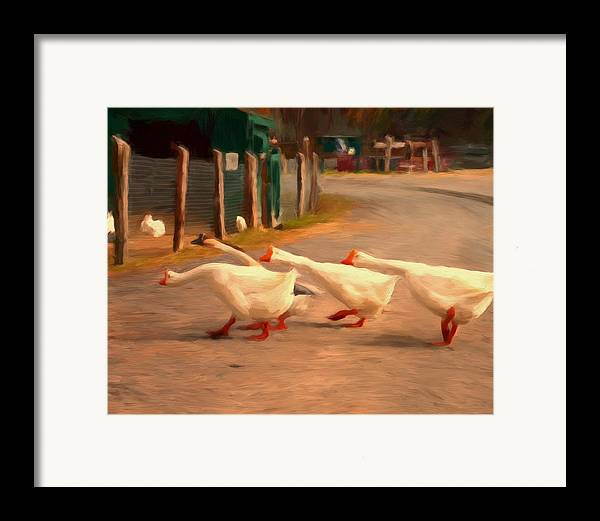 Geese Framed Print featuring the painting Goose Crossing by Michael Pickett