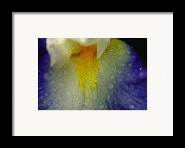 Water Drops Framed Print featuring the photograph Great Beauty In Tiny Places by Jeff Swan