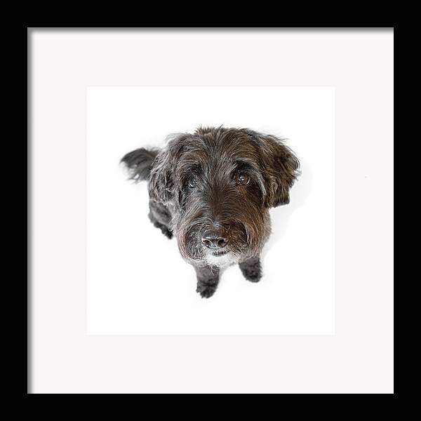 Dog Framed Print featuring the photograph Hairy Dog Photographic Caricature by Natalie Kinnear