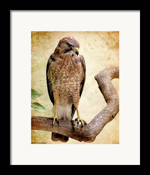 Eagle Framed Print featuring the digital art Hawk With Fish by Ray Downing