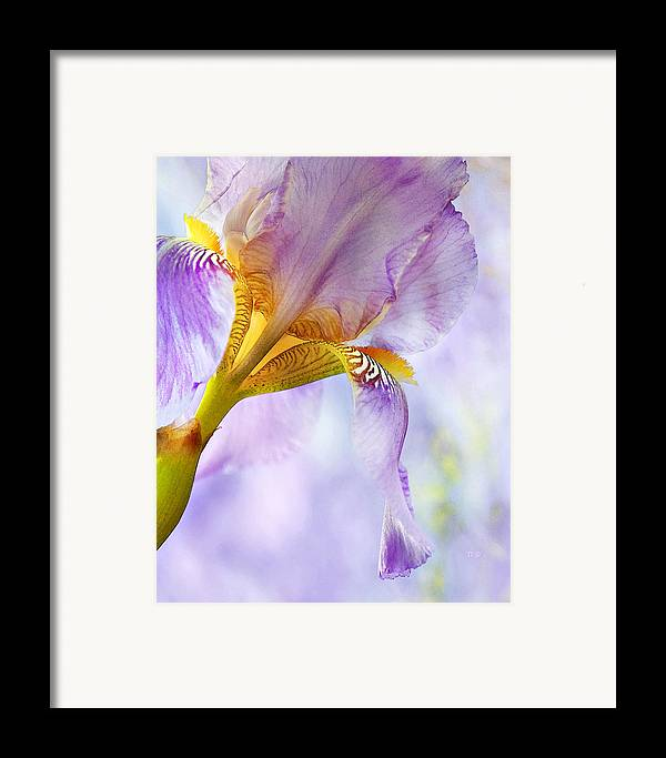 Floral Framed Print featuring the photograph Heavenly Iris 2 by Theresa Tahara