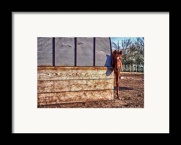Horse Framed Print featuring the photograph Hidden Horse by Ian Van Schepen