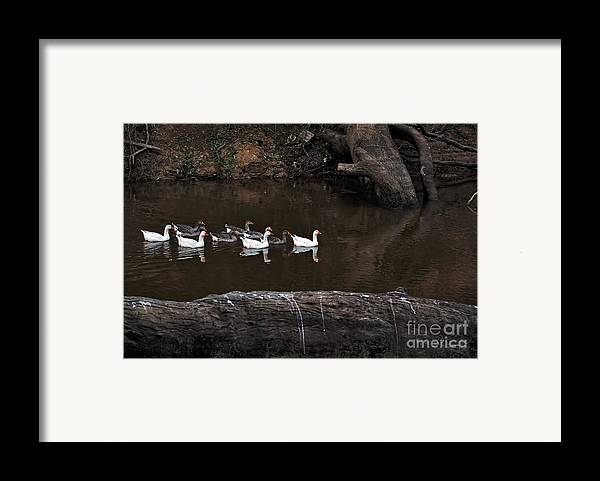 Photography Framed Print featuring the photograph Homeward Bound by Kaye Menner
